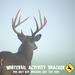 Whitetail Activity Tracker